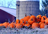pumpkins 103114_0443 2