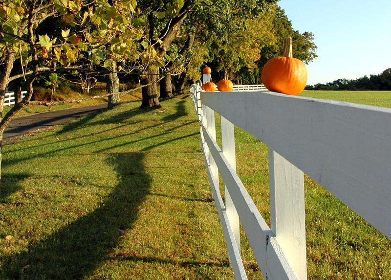 pumpkin fence 110610 0431 2