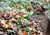 deer 102314_0157