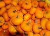 pumpkins little MCH 101909 195257