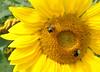 sun 92414_0760 2