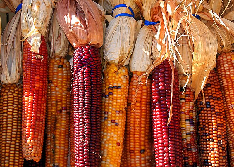 corn MCH 101909 195256