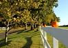pumpkin fence 110610 0431 3
