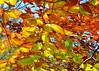 leaves 102014_0838