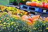 pumpkin pallett  092815_0126 2