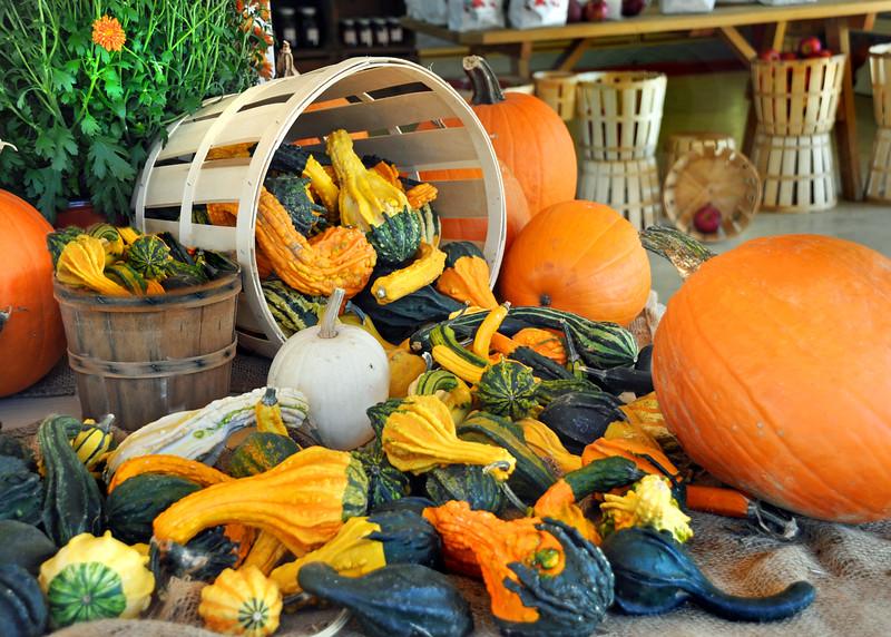 basket of gourds 102315_0170 4