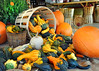 basket of gourds 102315_0170 4