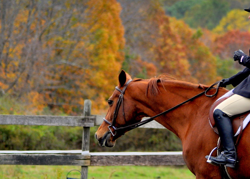 horse Fall folage 29 1-001