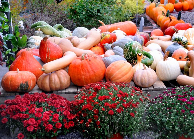 gourd pallett  092815_0119