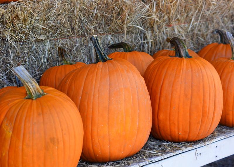 pumpkins 091915_7530
