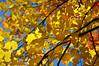 leaves 102315_0220