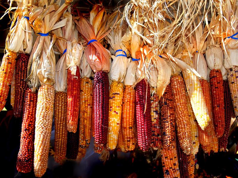 corn MCH 101909 195255