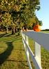 pumpkin fence 110610 0431