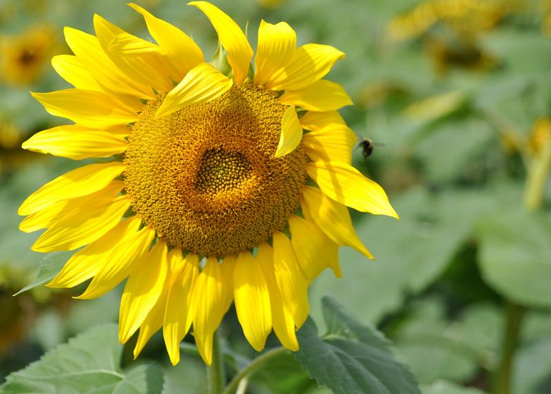 Sun 92414_0702