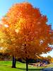 Tree Autumn MCH 102106 211268
