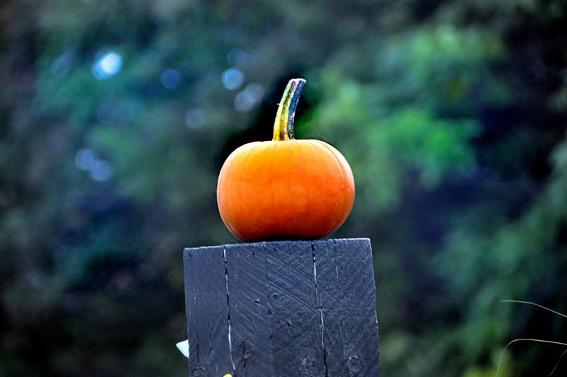 pumpkin 092815_0133 2