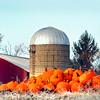 pumpkins 103114_0434 4 long