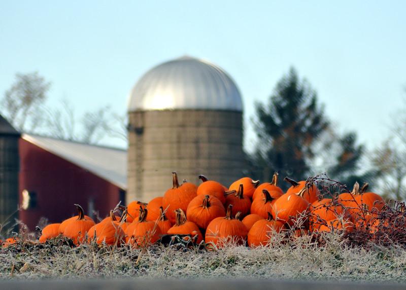 pumpkins 103114_0437 2
