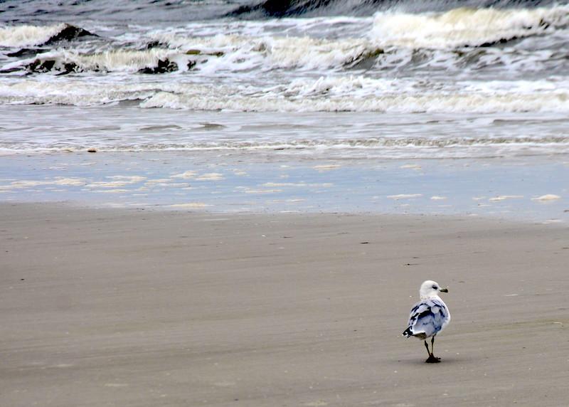 beach 81513_0414