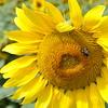 sun 92414_0704 2