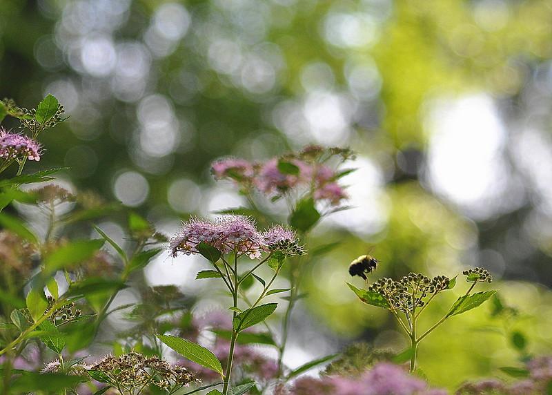 bee 61513_0070
