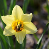 bee daffy 042915_1096 3