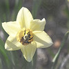 bee daffy 042915_1096 pen3
