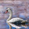 swan 101015 _8548 pink watercolor2