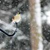 snow bird 012615_0329e