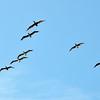 birds 081611_0449