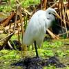 bird 033112_0029-1