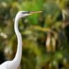 bird 030115_0453 2