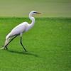 bird 030115_0448