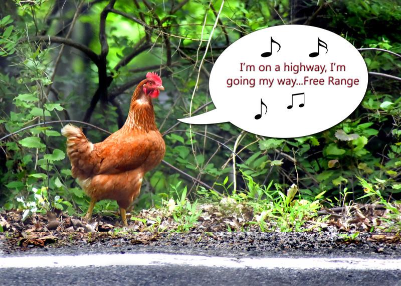 chicken 062615 _3570 2 text higway