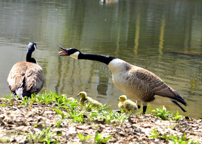 goose 50714_0338 2