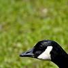 goose 50714_0227 2