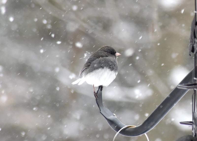 snow bird 012615_0374 2