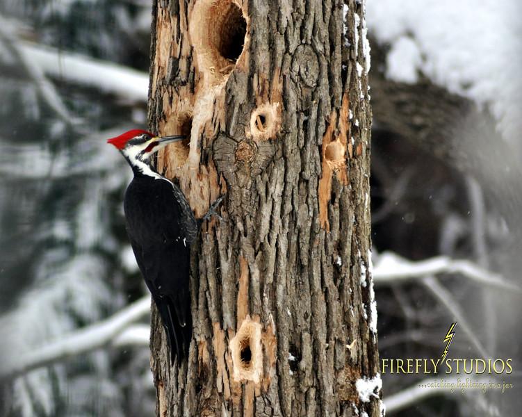 woodpecker 2 brand