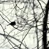 snow bird 012615_0382 3