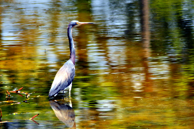 heron water color 81213_0737