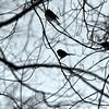 snow birds 012615_0356