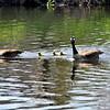 goose 50714_0223 2