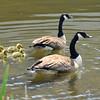 goose 50714_0355 4