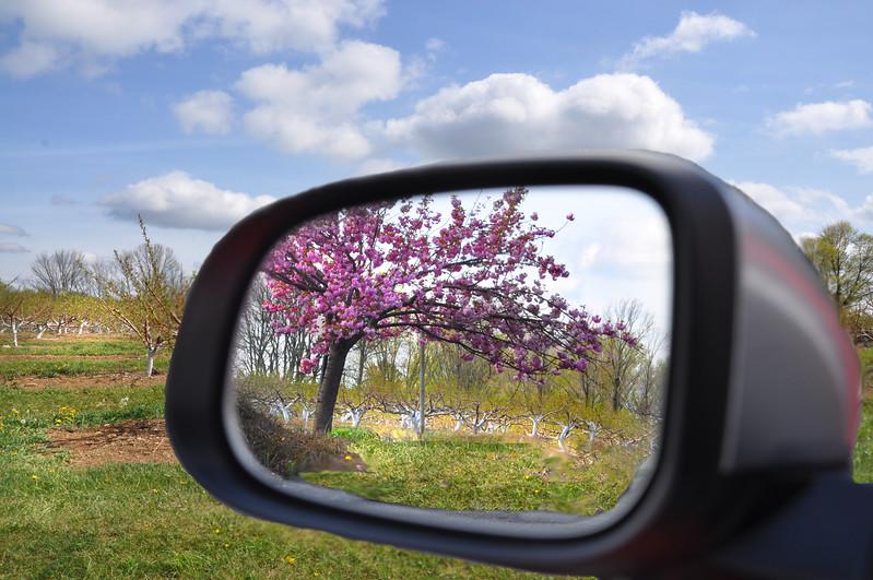 car mirror 042716_0128