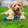 puppy 072415 _4258 2