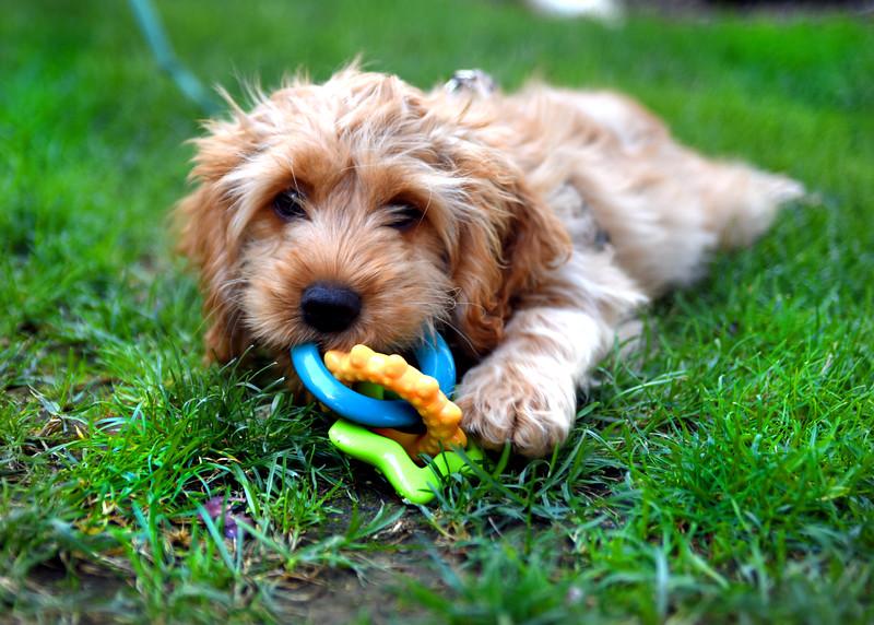 puppy 072415 _4289 2