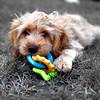 puppy 072415 _4289 2 fbw 2