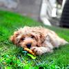 puppy 072415 _4287 2