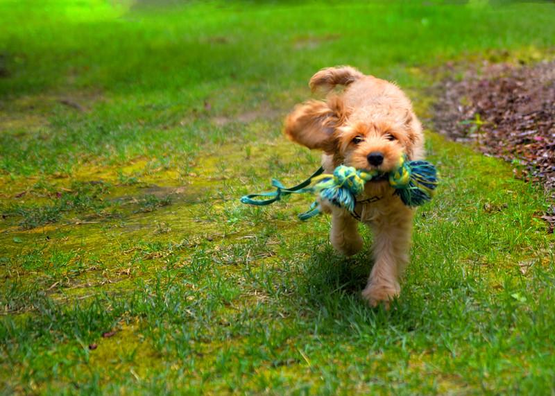 puppy  072415 _4199 2