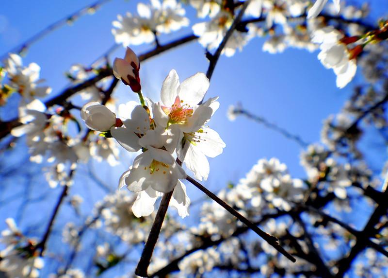 bloom  41713_836